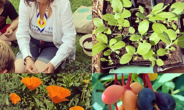 Medicinal Garden Stewardship with Lori Snyder