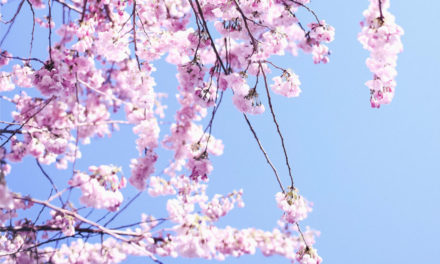 Spring Sensory Walks