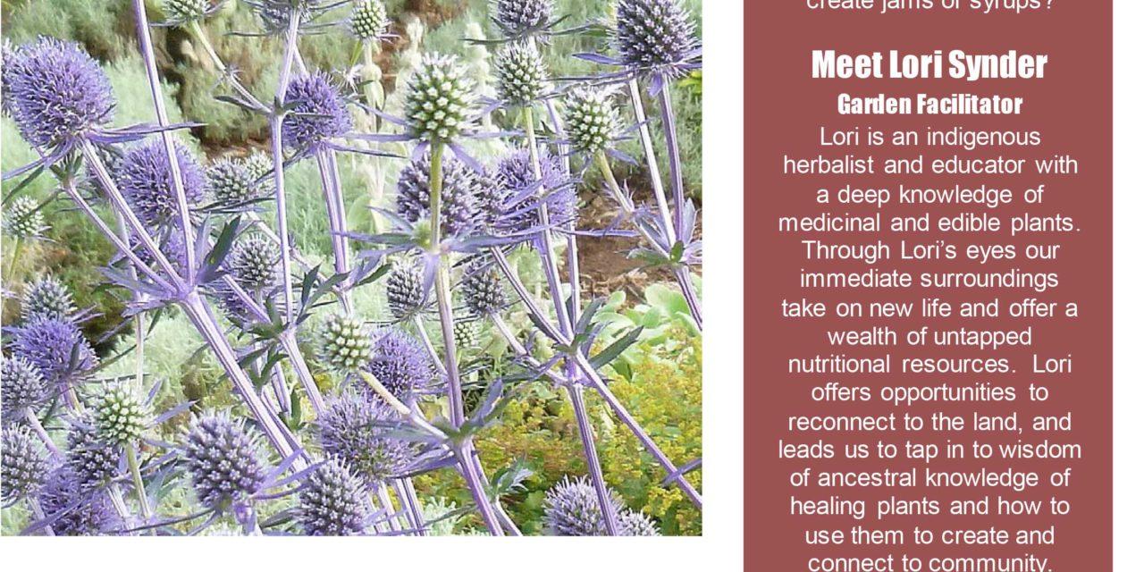 Lori Snyder Medicinal Garden