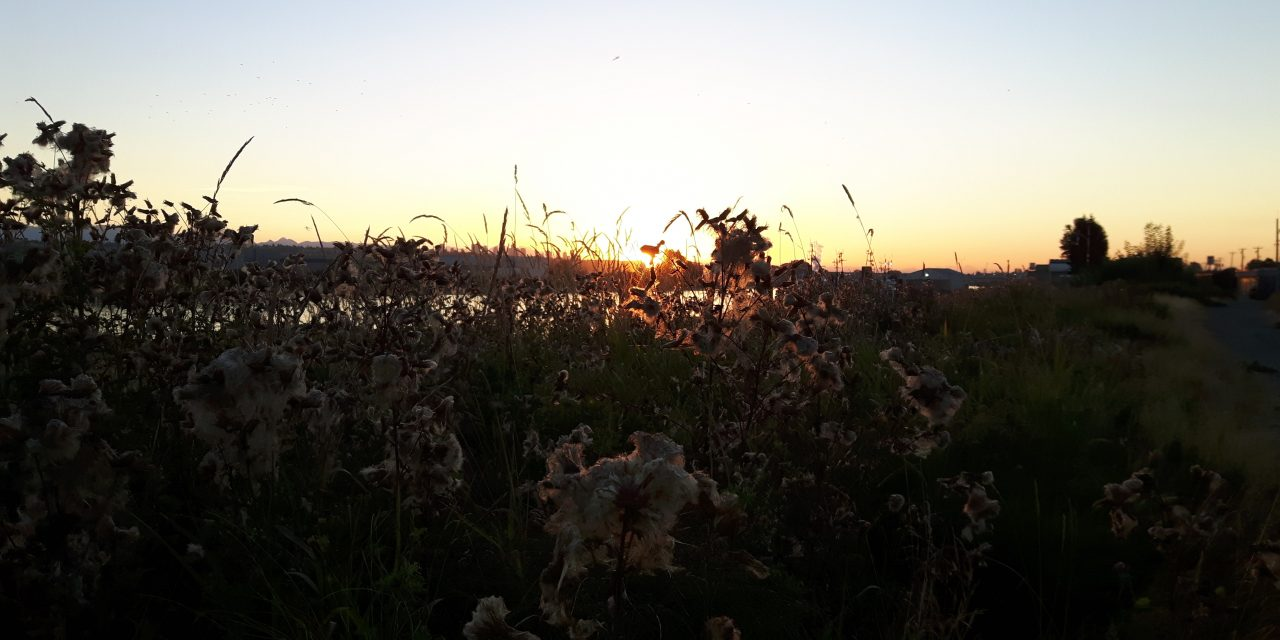 Solstice Dawn Walk