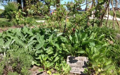 New Gardening Dates with Lori Snyder